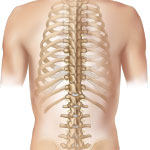 Image of a spine